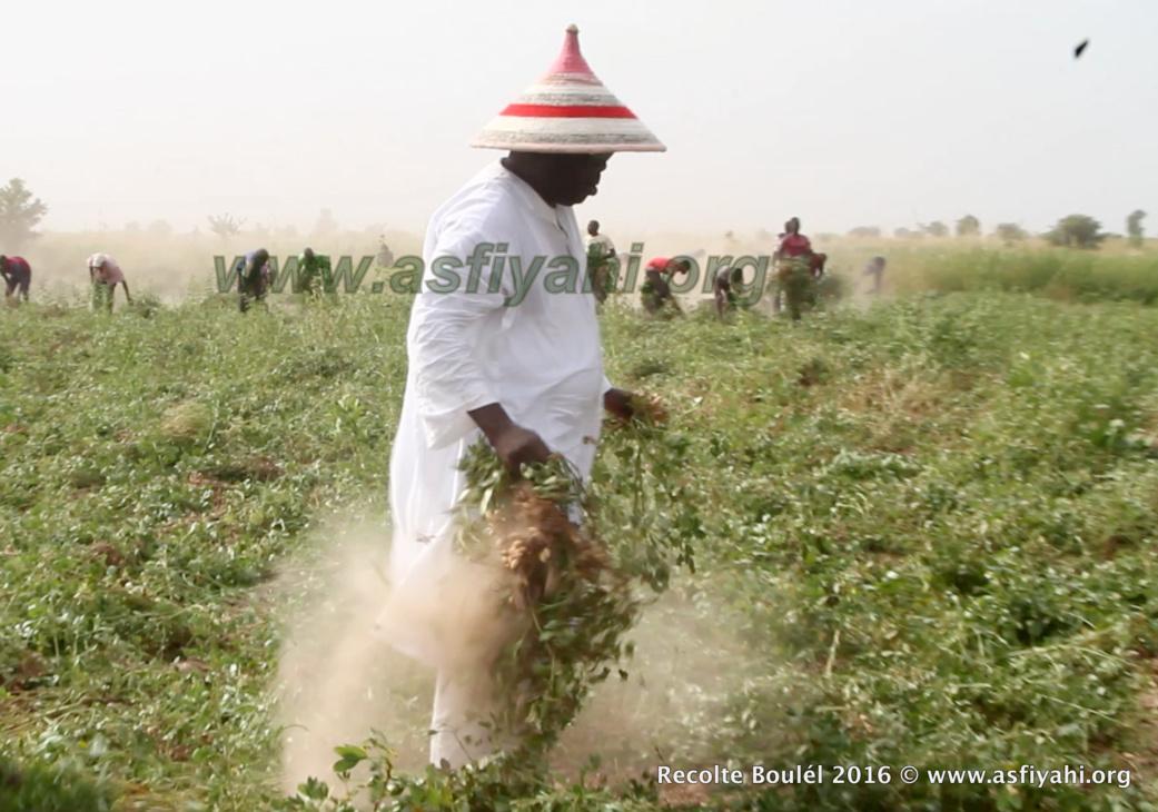 Les champs de Boulel, illustration de la dimension économique de la Tidjaniyya