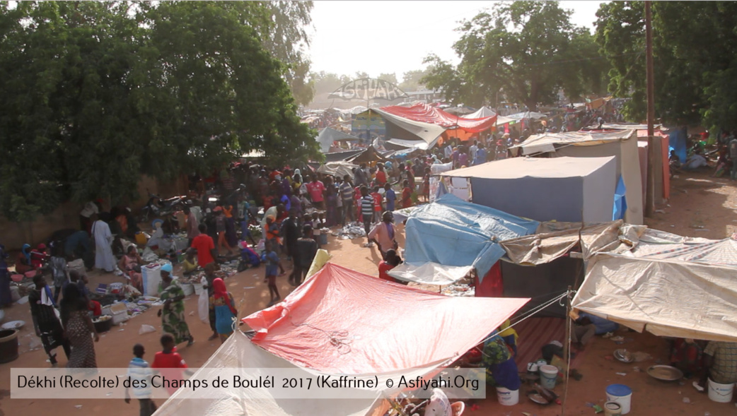 PHOTOS - Regardez les Images de la Récolte 2017 des Champs de Boulél (Kaffrine), cultivés par Serigne Abdoul Aziz SY Al Amine