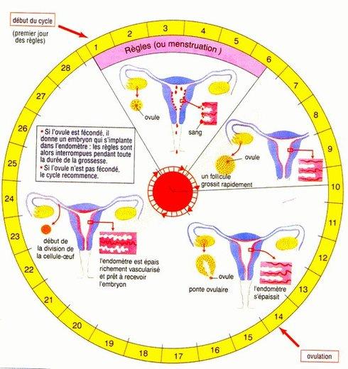 LA PÉRIODE MENSTRUELLE : Le miracle scientifique des menstrues dans le Saint-Coran, les conduites à tenir pendant la prière, le Ramadan et les rapports intimes etc...