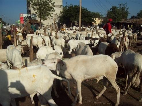 Tabaski ou Aîd El Kabir : Sens et Significations,Conditions d'élligibilité des bêtes