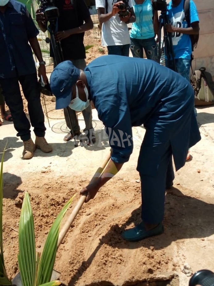 PHOTOS - Campagne de Reboisement 2020 - Plantation d'arbres dans la Ville de Tivaouane.