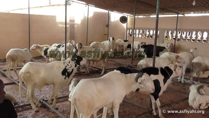 """PHOTOS - """"KHAROU TIVAOUANE"""" - Les Images de la traditionnelle ceremonie annuelle de distribution de Moutons"""