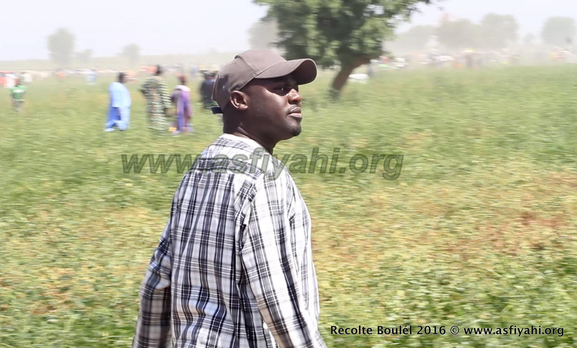 PHOTOS - Regardez les Images de la Récolte des Champs de Boulél (Kaffrine), cultivés par Serigne Abdoul Aziz SY Al Amine